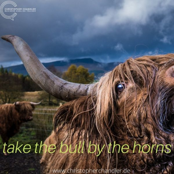 take the bull by the horns idiom